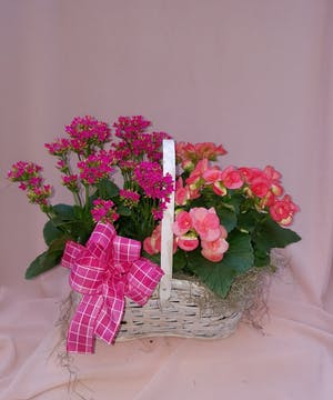 Double Flowering Plant Basket