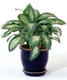 Indoor green plant