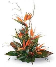 "Say ""Thank You"" With Tropical Birds Of Paradise"