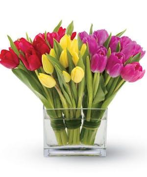 Trio Of Tender Tulips