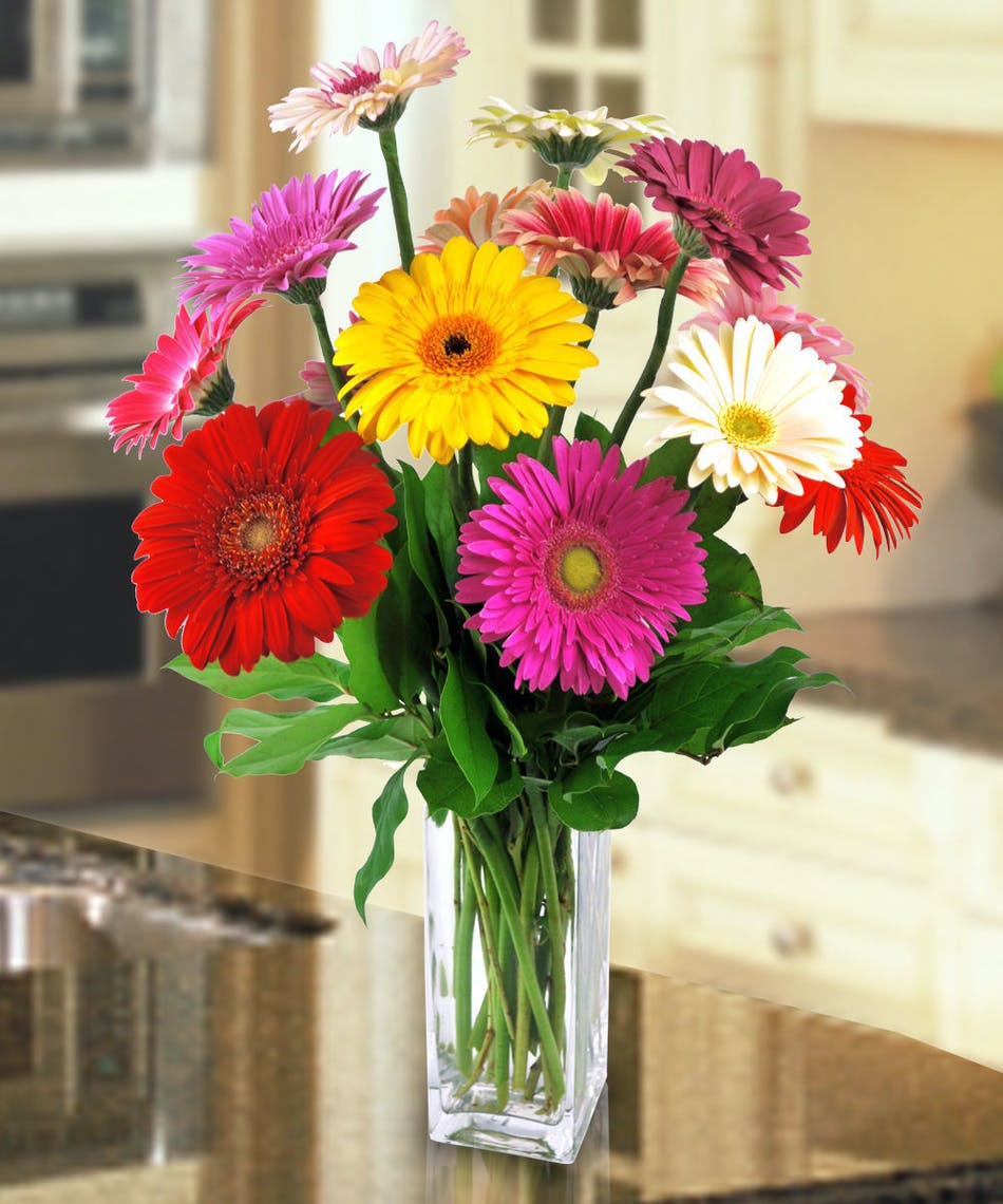 Delightful gerbera daisies river dell flowers oradell florist delightful gerbera daisies river dell flowers oradell florist flower delivery izmirmasajfo Images