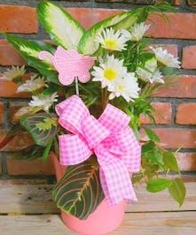 Planter Baby Girl