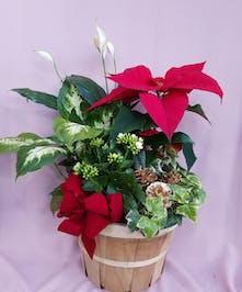 Holiday Basket Garden