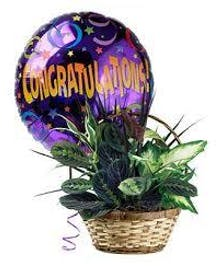 Congratulations Plant Basket