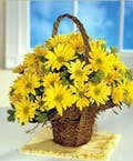 Yellow Daisy Basket