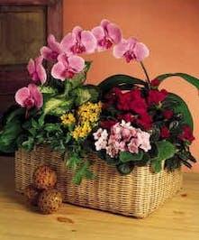 Large Assortment of the season's prettiest plants