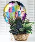 Happy Birthday Basket Garden