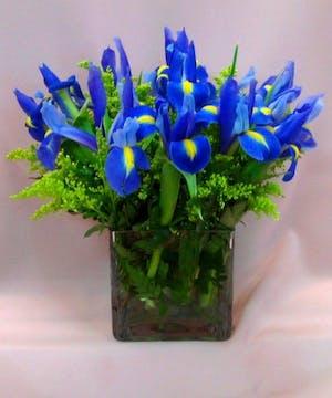 Breezy Blue Iris