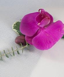 Single Purple Bout