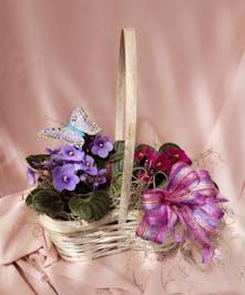 Double African Violet Basket