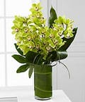 Verdant Orchids