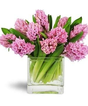 Happy Hyacinths