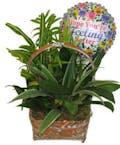 Get Well Plant Basket