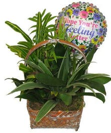 Get Well Plant Basket
