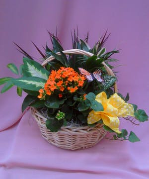 Wicker Basket Garden
