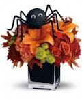 Spine Tingling Spider