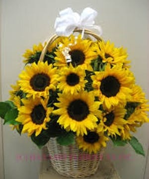 Handled wicker basket filled with Sunflowers