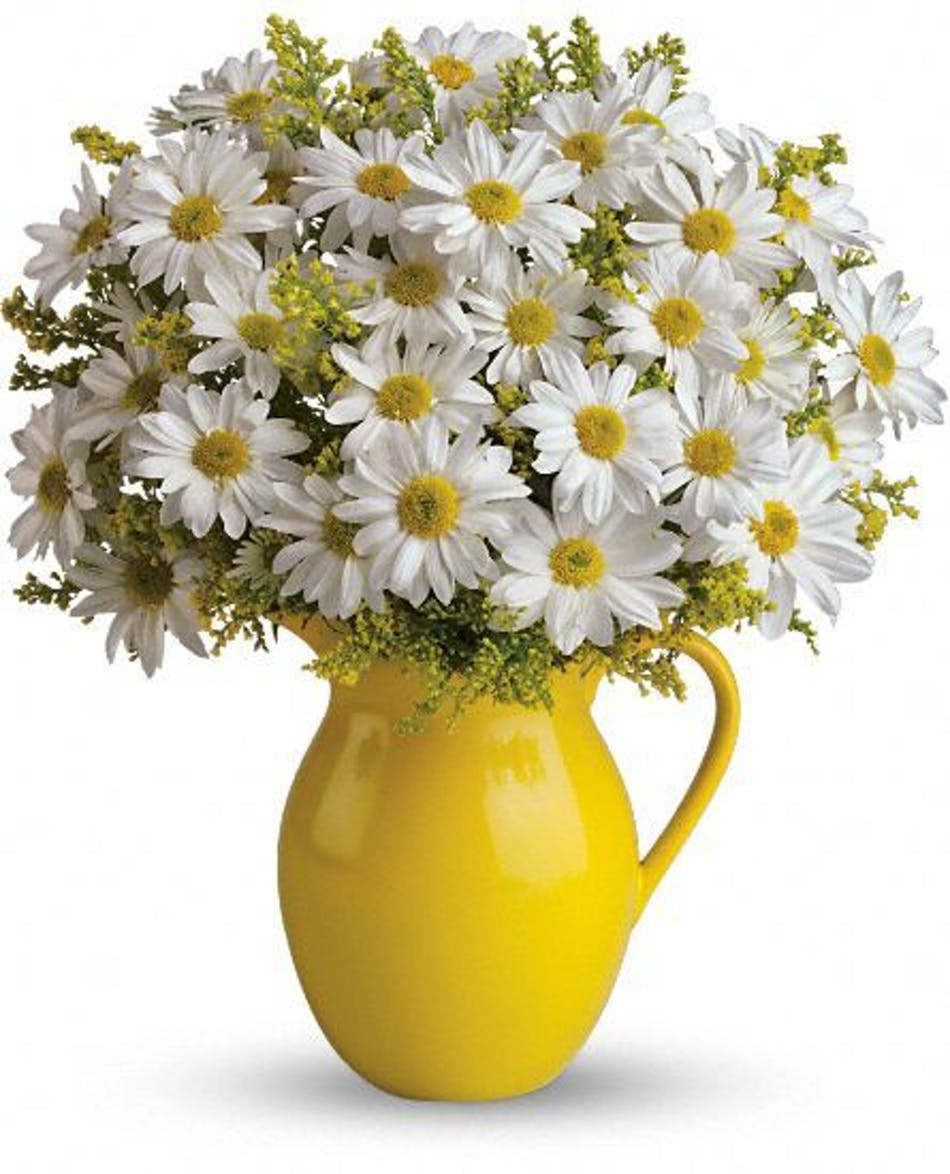 Sunny Daisies River Dell Flowers Oradell Florist Flower Delivery
