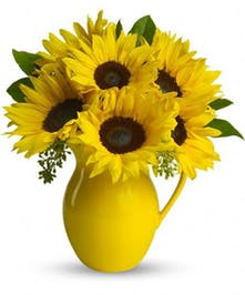 Sunny Pitcher of Sunflowers