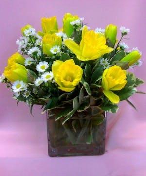 Sunny Yellow Daff-o-dillies