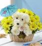 Sunshine Pup