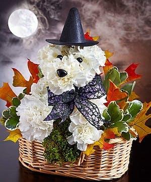 Halloween pet
